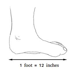 1 foot
