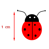 1 cm is approximately the length of ladybug
